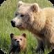 Bear Sounds by MooSounds