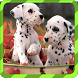 Puppy Games - Spot Differences by Fizizi