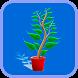 Plantas Medicinais by Shashi kShastri Zone