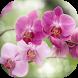 Орхидея. Орхидеи
