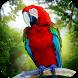 Jungle Parrot Simulator - try wild bird survival!