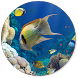Fish Wallpapers by Recci