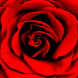 Roses Photo Collage Editor by Creativ Collage