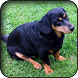 Dachshund Wallpapers by HAnna
