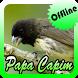 Canto do Papa Capim Preto Novo Offline by Topek App