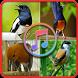 Suara Burung Offline - Masteran Suara Burung by kicaumania suara burung