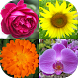 Flowers Quiz: Beautiful Plants by Andrey Solovyev
