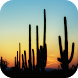 Cactus Wallpapers by Leafgreen