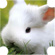 Super Rabbit Race by Alexis G. Aponesto