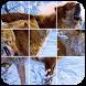Ferocious Wolf Puzzle by funpuzzlegames