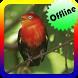 Canto do Passaro Uirapuru Offline by Topek App