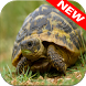 Turtle Wallpapers by Animal Wallpapers