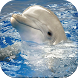 Dolphin Wallpapers by Fresh Wallpapers