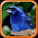 Baixar Canto Azulão para Encartar by Suporter App