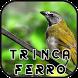Canto de Trinca Ferro New by Anggit G