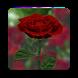 3D Rose Live Wallpaper by Oleksandr Popov