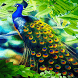 Peacock Beauty Live Wallpaper by Daksh Apps