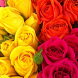 Цветы розы by AppPromoStyle