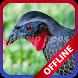 Canto Do Jacu Femea Cantando Offline New by ddwip apps