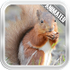 Squirrel Video Wallpaper by Video Animated Live Wallpapers