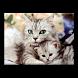 Породистые кошки by Юла Group