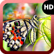 Butterfly Walpaper by MaxImages