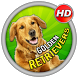 Golden Retrievers Wallpaper by NivelaStudio