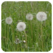 Pollen (de) by Spreebytes