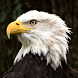 Eagle HD Wallpapers by JsA Mobile