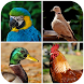 Bird Sounds : RingTones by Vipulpatel808