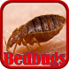 Bedbugs Disease by Droid Clinic