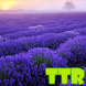 live wallpaper lavender by TTR