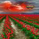 Red Flower Land LWP by Daksh Apps