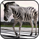Zebra Wallpapers by PikasApps
