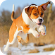 Dogs GIF by Dabster Gif Zone