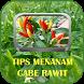 Tips Menanam Cabe Rawit by Ragam Studio