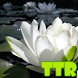 lotus live wallpapers free by TTR