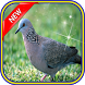 Masteran Burung Perkutut by Panji Lor