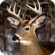 Deer Hunting Calls by Creeping Doom Ent.