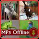 Masteran Kasar isian Suara burung Offline by kicaumania suara burung