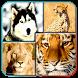 Animals Spelling Quiz for Kids by KBC GAME STUDIO