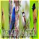 Kicau master burung 2017 by perimusicadev