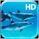 Underwater Dolphins Live