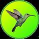 Master Kicau Kolibri by R Droid