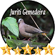 Canto Juriti Gemedeira by jonn jeff