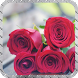 Red Roses Pack 2 Wallpaper by LiveHD