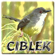 Ringtones Burung Ciblek by ABK Games