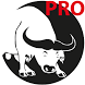 Bracongo Pro