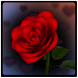 3D Rose Bouquet LWP Free by Space Cadet