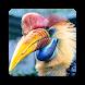 Hornbill Wallpaper HD